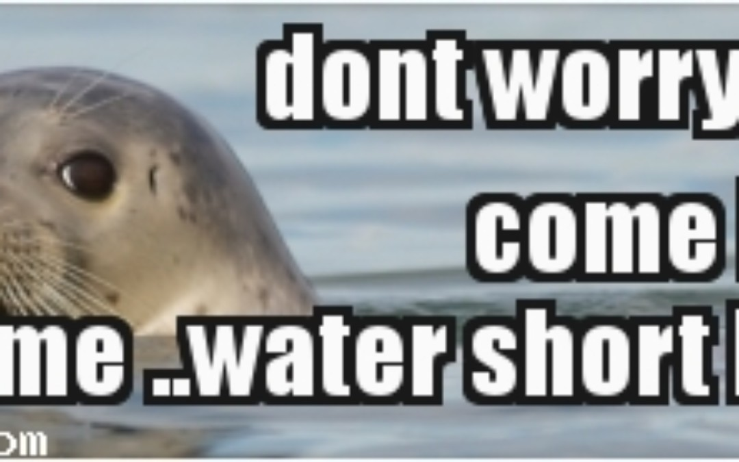 meme waterl
